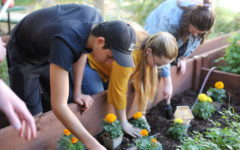 Planting Marigolds for Hope and Healing