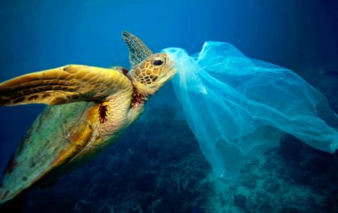 Microplastics: Not a Micro Problem