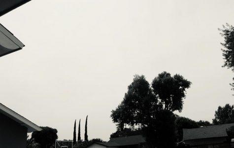Through a Lens: Black and White